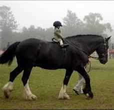 smallchildbighorse
